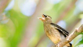 Turisté si stěžovali na příliš hlasité štěbetání ptáků, nakonec z hotelu odjeli dřív