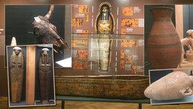 Mumie krokodýlů i koček, satirické básně: Náprstkovo muzeum ukazuje netradiční tvář starověkého Egypta