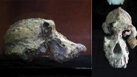 Předchůdce člověka se jmenuje MRD. Vědci objevili lebku starou 3,8 milionu let
