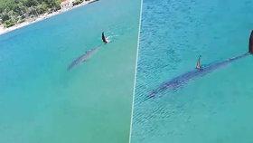 Žraločí panika v chorvatských vodách! Vrátil se na Jadran žralok mako?