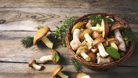 Jak správně zamrazit houby? Špatný postup ohrožuje vaše zdraví!