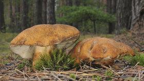 Kam na houby v okolí Brna a dalších místech jižní Moravy? Tipy od mykologa