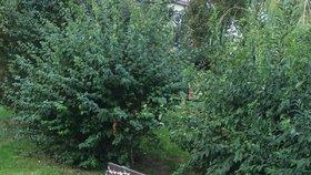 Výkon »bezmozka«: V hornopočernickém parku v Ratibořické se kdosi vyřádil s montážní pěnou