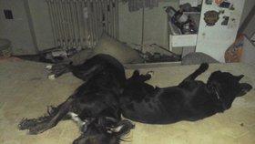 Nedařilo se mu, tak podle policie brutálně podřízl svého psa: Chovateli hrozí až 3 roky!