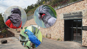 Ráj exotických opeřenců: V novém pavilonu Zoo Praha potkáte černého proutníka, baviče i papouščí opici