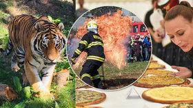 Tipy na víkend: Zvířata mají svůj den, mlsejte na festivalech jídla nebo obdivujte tvrdé muže