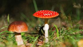 Atlas hub: Mykologové popisují nejčastější jedlé, nejedlé a jedovaté houby