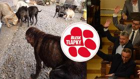 Úspěšný boj proti množírnám a vše o čipování psů! Takhle pokročila řešení problémů, na něž Blesk upozorňoval