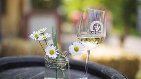 Běchovice budou v patřit dobrému vínu: Slavnosti proběhnou v sobotu