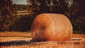 Sena je kvůli suchu opět málo. Zemědělci bědují: Zásoby máme, ale žádná sláva