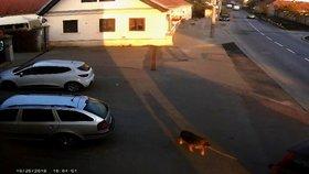 Lidská bestie: Muž uvázal svého psa za auto a rozjel se
