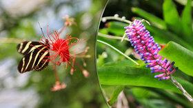 Botanická zahrada v Troji uvádí intimní výstavu: Kytičkám nakouknete přímo »pod sukně«