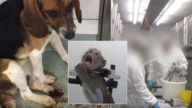 Laboratoř v Česku dělala neschválené pokusy na toulavých psech: Některé adoptovala i z útulků