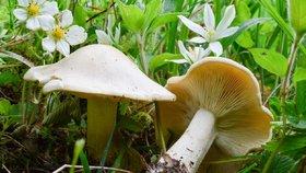Májovka: Kdy vyrazit na oblíbenou jarní houbu? Mykolog prozradil osvědčený trik