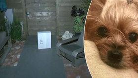 Pošťák zabil jorkšíra: Přes plot bez rozmyslu hodil těžký balík, ten psíka rozmačkal