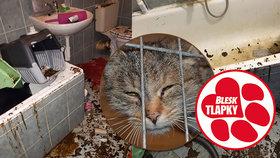 Mrtvé kočky schovávala vmrazáku. Ty, co přežily, se teď léčí. Blesk tlapky je navštívily