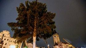 Na Staroměstském náměstí stojí vánoční strom. Urazil 120kilometrovou štreku, rozsvítí se v sobotu