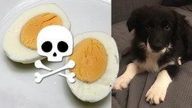 Bambi umírala v ukrutných křečích: Štěně snědlo vejce napěchované zakázaným pesticidem