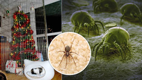Vánoční stromeček ukrývá až 25 tisíc živých organismů: Co zastaví jejich vpád do vaší domácnosti?