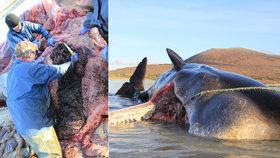 """Velryba měla v žaludku 100 kilo """"bordelu"""" z oceánu. Stav zvířete experty vyděsil"""