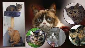 Poznáte, co si vaše kočka myslí? I chlupáči vyjadřují emoce výrazem, zjistili vědci