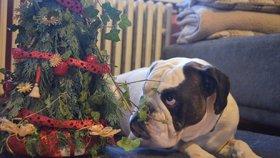Pozor! Blesk tlapky vyhlašují fotosoutěž o nejhezčí vánoční fotku s domácím mazlíčkem