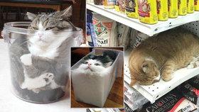 """Neuvěřitelné kočičí pelíšky: Na """"ninju"""", v misce či dóze i mezi granulemi"""