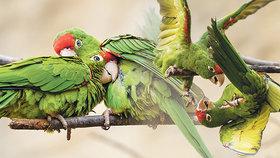 Společenské tulení papoušků v pražské zoo: Kamarádi, máme se rádi! Co chystá zoo o svátcích?