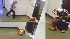 Děsivé video: Pejska za vodítko zachytil výtah: Táhl zvířátko za krk nahoru!