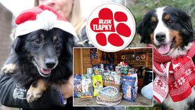 Chlupáčům veselejší Vánoce: Dary vydavatele Blesku zaplní misky dvou útulků