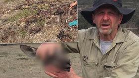 Hrůzný nález v horách: Muž našel jedenáct uřezaných klokaních hlav!