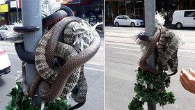 Sssssmrtící Vánoce: Nebezpeční hadi se objevili jako sváteční dekorace na ulici
