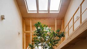 Krása! Uprostřed rodinného domu v Kjótu roste strom