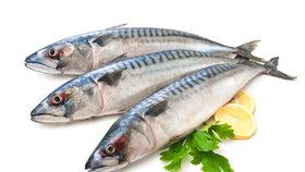 K Česku se blíží tropická otrava z mořských ryb. Jed nezničí ani vaření, ani mrazení
