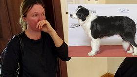 Venčila psa, cyklista se lekl a přeletěl přes řidítka: Ochrnul! Žena dostala podmínku