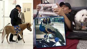 Konec poníků a pávů na palubě: Aerolinky se vypořádají se zvířaty v letadlech novým zákonem