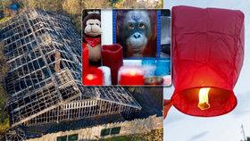 Lampiony štěstí budou mít v Praze utrum! Zastupitelé reagují na neštěstí v zoo v Krefeldu