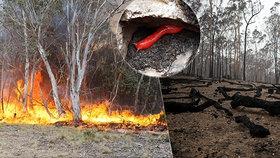 33 obětí, sežehnutí klokani a koalové: Šetření požárů začíná, v metropoli mimořádný stav