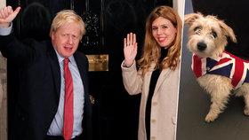 """Johnson po brexitu hrozí Bruselu cly, premiérova """"vydřička"""" slavila odchod z EU se psem"""