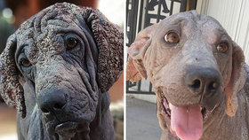 Zubožení psi dostali novou šanci! Šokující fotky před a po vás dostanou