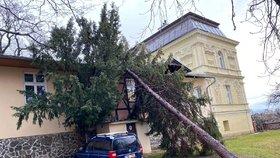 Prudký vichr decimoval pražské lesy a parky: Za oběť mu padlo přes 600 stromů!