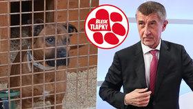 """Babiš znovu slibuje: Rýsují se tvrdé tresty pro tyrany? Novelu """"pohřbilo"""" i ANO"""