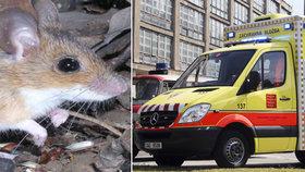 Česko zasáhla hantaviróza: Nemoc přenáší na lidi drobní hlodavci