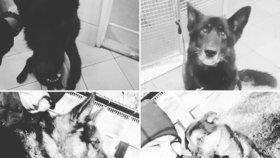 Šest speciálně cvičených policejních psů zemřelo. U jejich kotců prasklo potrubí