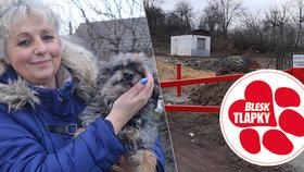 Psí koncentrák šel k zemi, majitelka hromadí psy u domu. Veterinářům vadí jen nepořádek