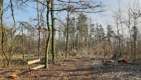 Pražský les v ohrožení? Na Ďáblický háj má spadeno kůrovec. Několik stromů už šlo k zemi