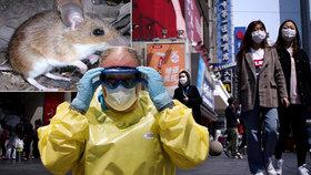 Další smrtící virus z Číny? Muže tam zabil hantavirus, řádil i v Česku