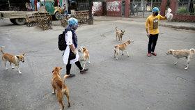 Koronavirus vyčmuchají psi? K hledání nakažených je chce vycvičit Izrael i Britové