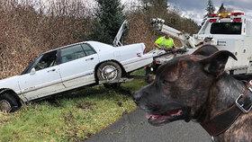 Policisté honili auto se psem za volantem: Zfetovaný majitel měl bizarní výmluvu