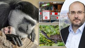 """Zavřená Zoo Praha tratí miliony, nesvá jsou i zvířata. """"Návštěvníci jsou pro ně rozptýlení,"""" říká ředitel Bobek"""